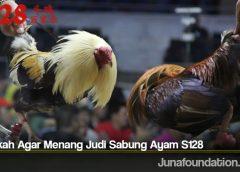 Langkah Agar Menang Judi Sabung Ayam S128