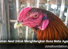 Perawatan Awal Untuk Menghilangkan Busa Mata Ayam